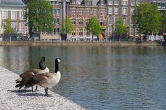 Geese and buildings Royalty Free Stock Images