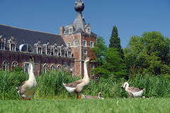 Geese in castle park Stock Photography