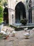 Geese in church's inner yard. Around pool Royalty Free Stock Photos