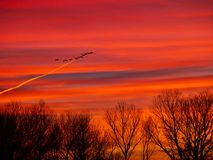 Geese, Contrail, Trees, and Sunrise royalty free stock image