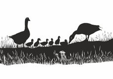 Geese family on spring meadow Royalty Free Stock Image