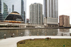 Geese feeding in grass along Chicago riverwalk stock image