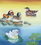 Geese flock swimming on pond watercolor vector illustration Royalty Free Stock Image