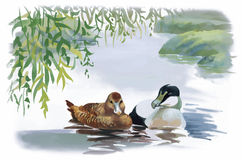Geese flock swimming on pond watercolor vector illustration Stock Image