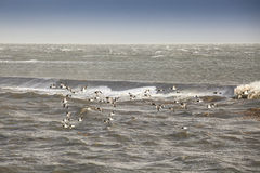 Geese flying across the ocean Stock Photos
