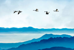 Geese flying against blue sky background Royalty Free Stock Photos