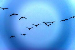 Geese flying into a fantasy world Royalty Free Stock Images