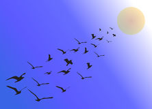 Geese flying in formation in summer. Vector Royalty Free Stock Photography