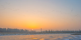 Geese flying at sunrise in winter Stock Photo