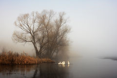 Geese in fog Royalty Free Stock Image