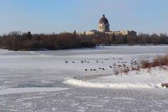 Geese on frozen lake at Regina Saskatchewan Stock Photography
