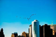Geese leaving New York City Stock Images