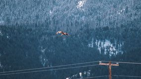 Geese Mates Fly Near Snowy Mountain. Two geese mates fly over electric wires, as they make their way to a snow-covered mountainside in a rural winter scene stock photography