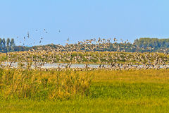Geese migrating south Royalty Free Stock Photos