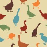 Geese pattern Royalty Free Stock Image
