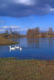 Geese on river Stock Photography