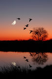 Geese at Sunset. Wild Geese Flying Against Moon at Majic Hour Sunset, Reflected in Peaceful, Still Pond Stock Photos