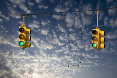 Geese And Traffic Lights Stock Image
