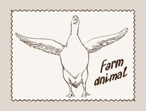 Geese vector hand drawn Royalty Free Stock Images