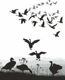 Geese - winged migration Royalty Free Stock Photography
