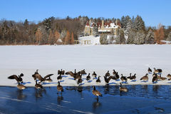 The Geese at Winter Royalty Free Stock Photography