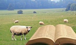 Geestelijke schapen royalty-vrije stock foto's