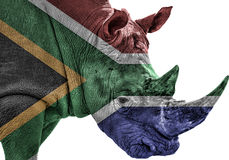 Gefährdetes Nashorn in Südafrika mit südafrikanischer Flagge lizenzfreies stockfoto