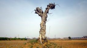 Gefährlicher Cuted-Baum mit Himmel Lizenzfreies Stockfoto