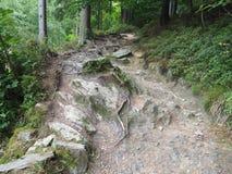 Gefährlicher Gebirgsweg mit Ästen und Steinen stockbild