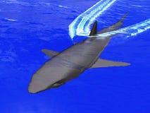 Gefährlicher Ozean Stockfoto