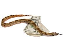Gefährliches Geld. stockbild