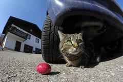 Gefährliches Ostern-Nest Stockfotografie
