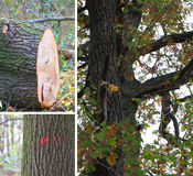 Gefällt zu werden Bäume stockbild