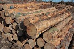 Gefällte Bäume Lizenzfreie Stockfotos