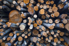 Gefällte Bäume Stockfotografie