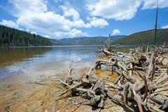 Gefällte Bäume vor nationalem See Pudacuo lizenzfreie stockbilder