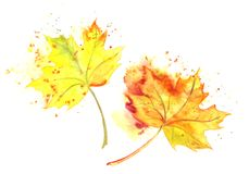 Gefällte Blätter des Aquarells handgemalter gelber Herbst lizenzfreie stockfotos