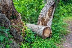 Gefällter Baum Lizenzfreies Stockfoto
