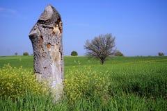 Gefällter Baum Lizenzfreies Stockbild