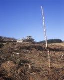 Gefällter Wald Stockfotos