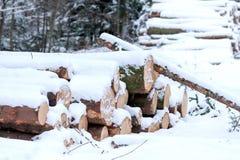 Gefälltes Holz unter Schnee Stockfotos