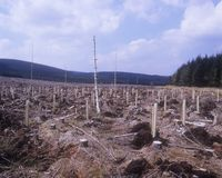 Gefälltes Waldland Stockfotos