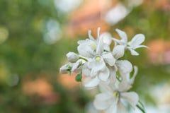 Gefälschte Blume Lizenzfreie Stockfotos