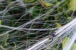 Gefälschte kleine Halloween-Spinnendekoration auf Busch mit Netz Lizenzfreies Stockbild