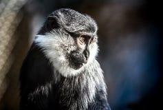 Gefälschte wild lebende Tiere Lizenzfreies Stockbild