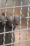 Gefängnis Lizenzfreies Stockfoto