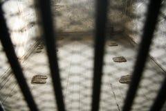 Gefängnis-Zelle Stockfotografie