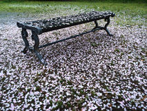 Gefühl von Kirschblüte Lizenzfreie Stockfotografie