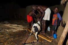 GEFÜLLTE MAISMEHLTASCHE, GHANA-ï ¿ ½ am 23. März: Nicht identifiziertes afrikanisches Jungenhilfen-fathe Lizenzfreie Stockfotos