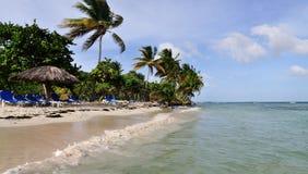 Gefüllter Strand der Palme Lizenzfreie Stockfotografie